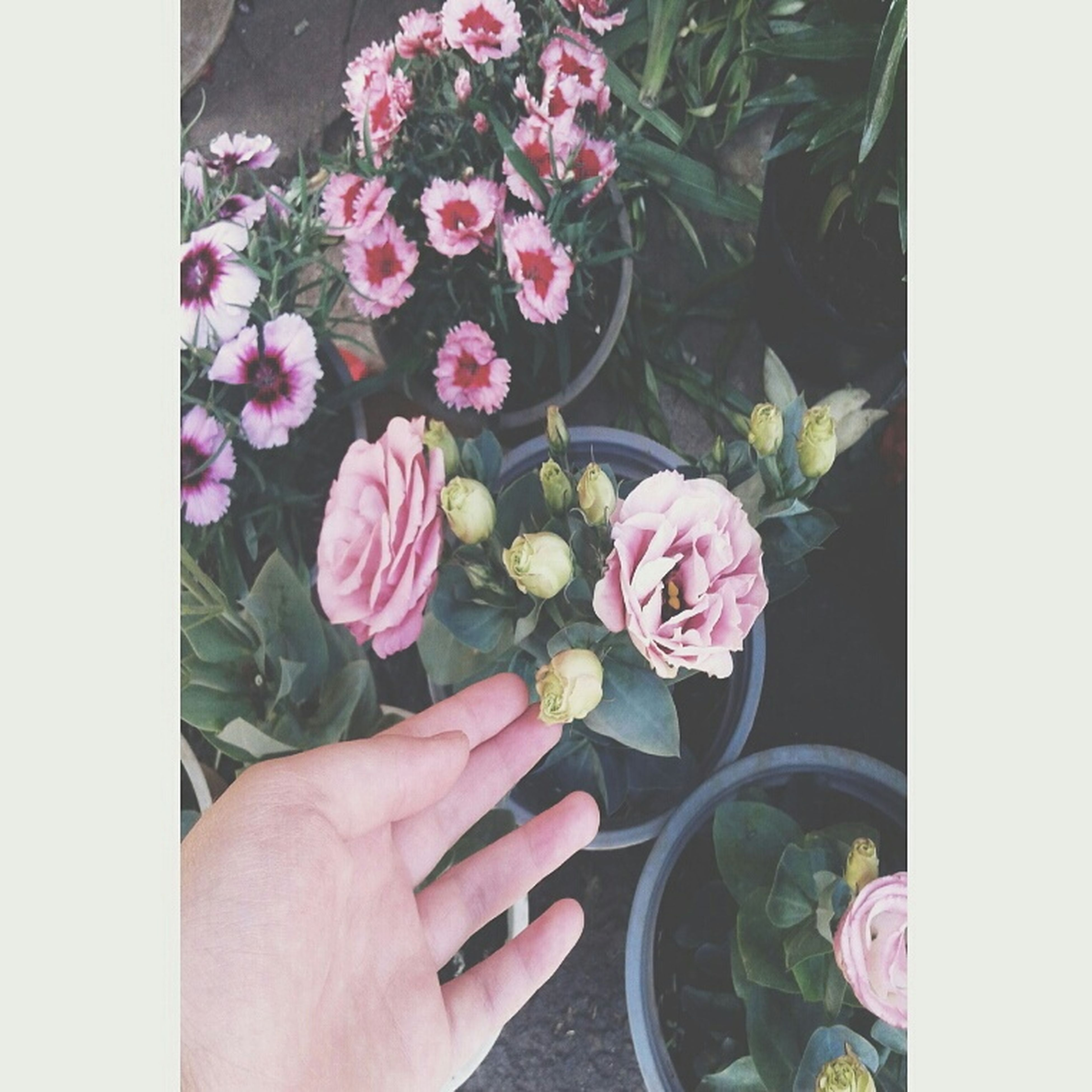person, flower, holding, part of, cropped, freshness, personal perspective, unrecognizable person, transfer print, fragility, lifestyles, human finger, auto post production filter, plant, petal, close-up, leisure activity
