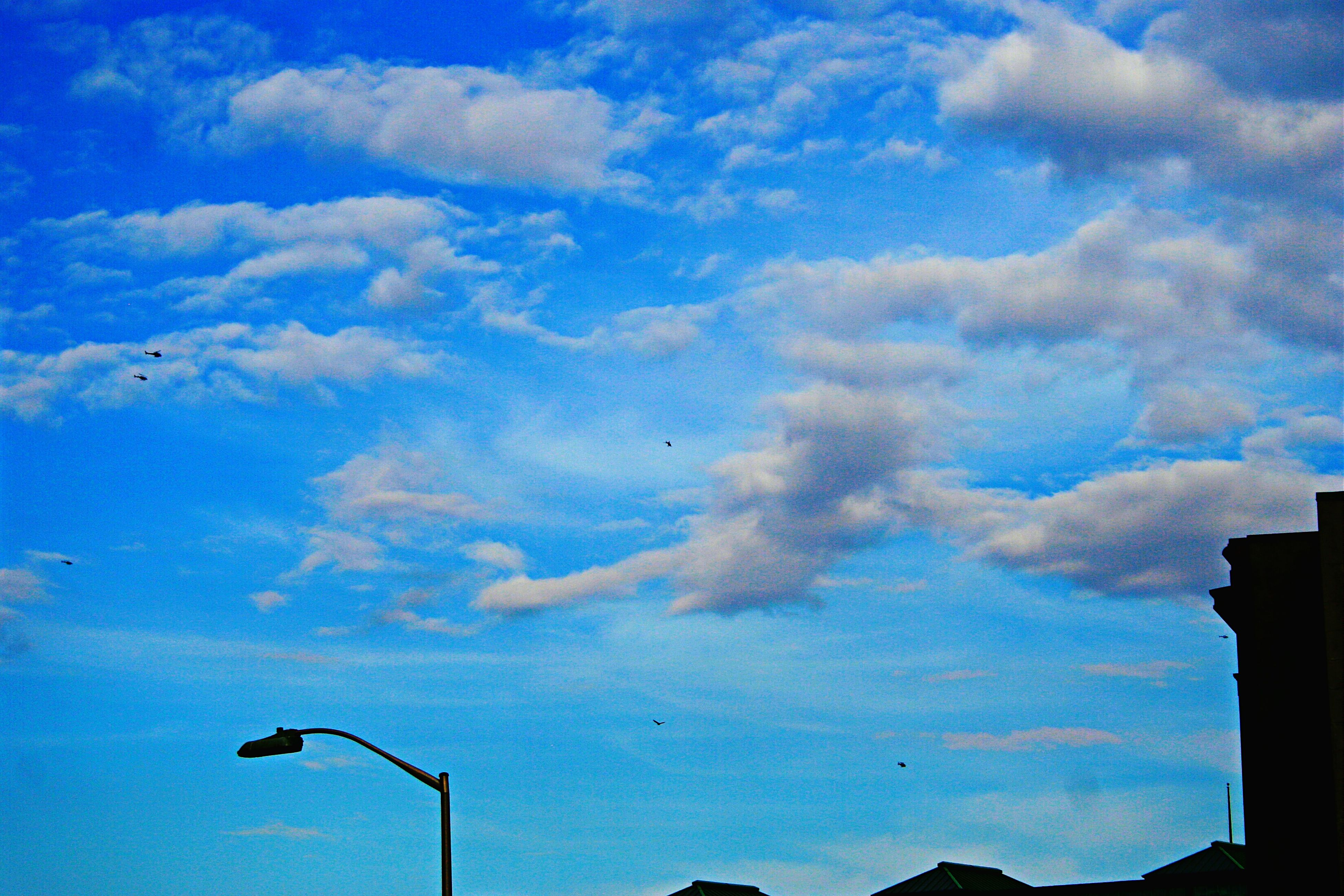 low angle view, sky, blue, silhouette, cloud - sky, bird, cloud, street light, animal themes, flying, nature, beauty in nature, lighting equipment, wildlife, cloudy, outdoors, no people, animals in the wild, dusk, tranquility