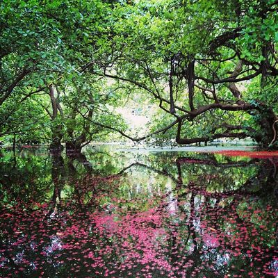 Monsoon Travel Naturetrippin Instaclick Instagramersgallery Reflection PicturePerfect <3
