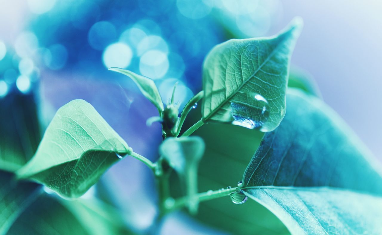 Beautiful stock photos of garden,  Beauty In Nature,  Botany,  Close-Up,  Dew