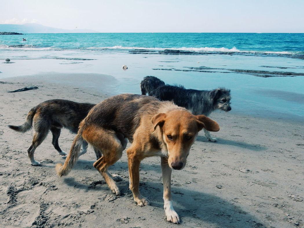 Beach Boys...dogs...Adventure Buddies Streetdogs Beach Dog Dogslife Best Friends Staying Together