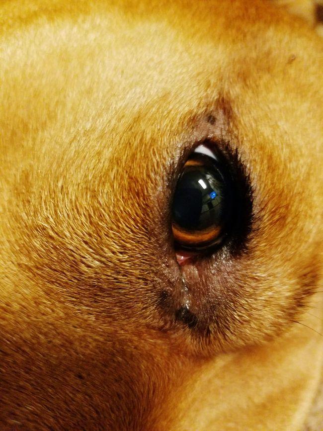 Animal,dog, Relaxing pet,no people,eyes Nose,lake city fl,animal body parts,eye lashes,nature,relaxing