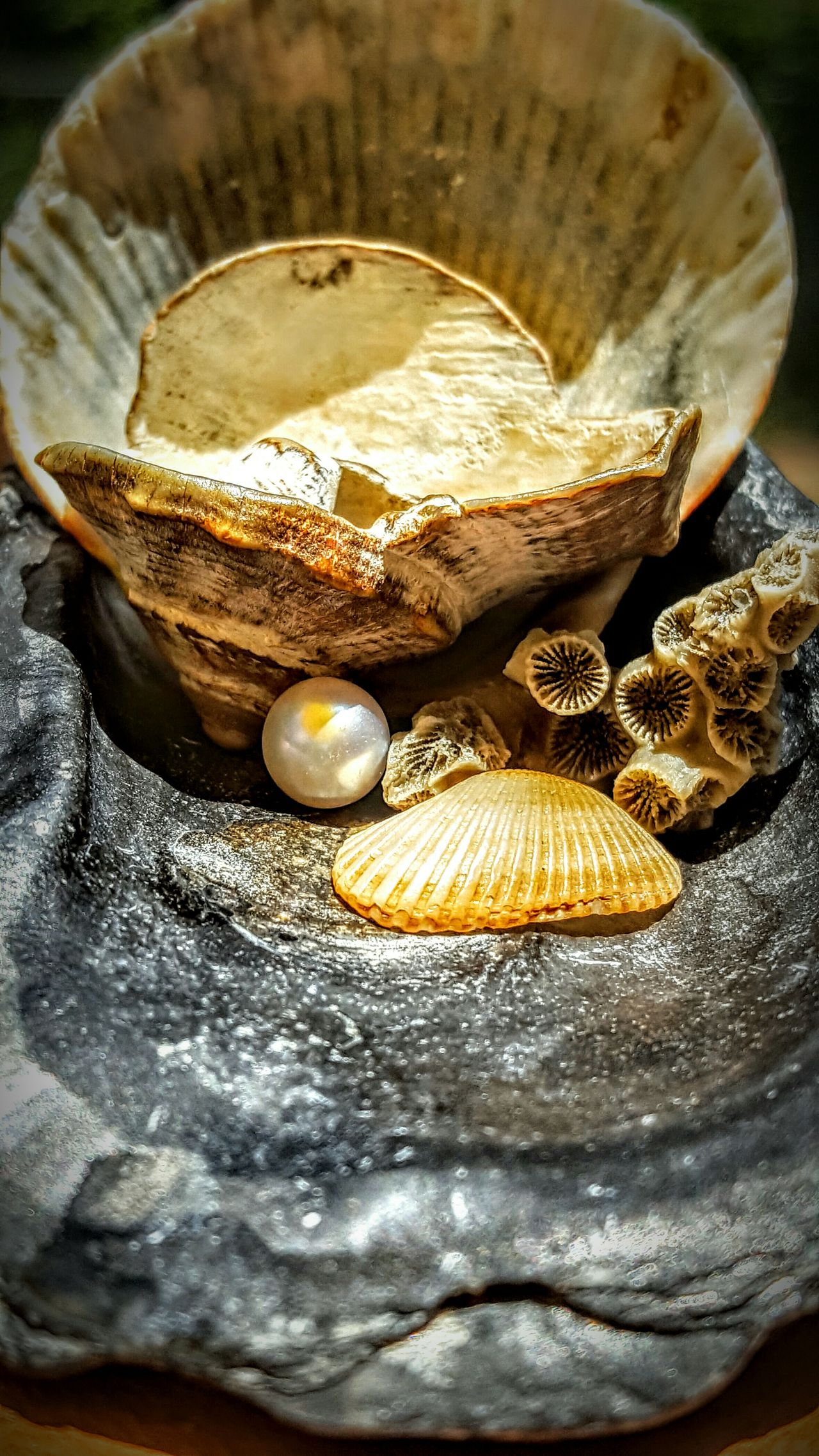 Seashell Seashells/dried Corals Seashells Seashell Collection Seashell Art Enjoying Life Nature_collection Seashellart Seashell❤ Seashell Hunt Check This Out Taking Photos