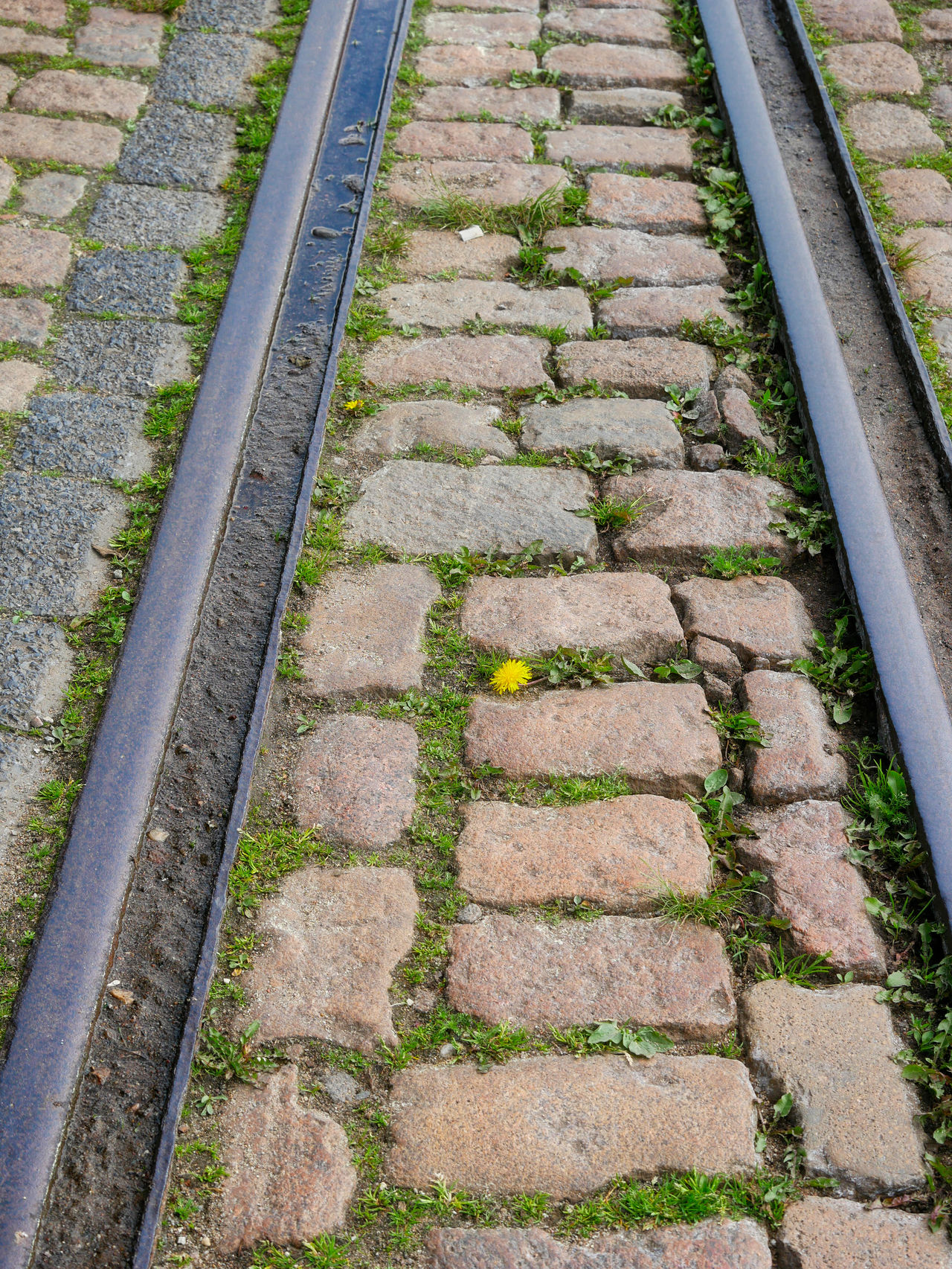 BYOPaper! Dandelion Day High Angle View Natural Beauty Natural Power Nature Nature On Your Doorstep Nature Photography Nature_collection Naturelovers No People Outdoors Rail Transportation Railroad Track Rails Stone Material Stone Pavement The Street Photographer - 2017 EyeEm Awards Yellow Flower