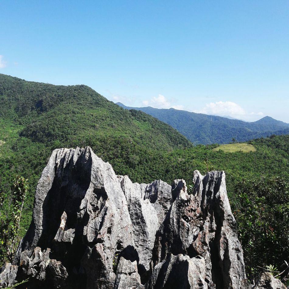 Mountain Nature Beauty In Nature No People Outdoors Day Scenics Mountain Range Landscape Sky Tree Tea Crop Animal Themes Philippines Ph Rizal Daraitan Mount Tree