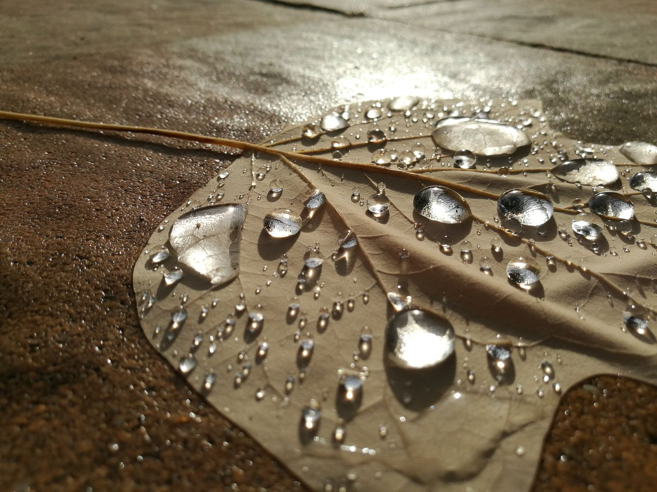 People And Places Close-up RainDrop Leaf