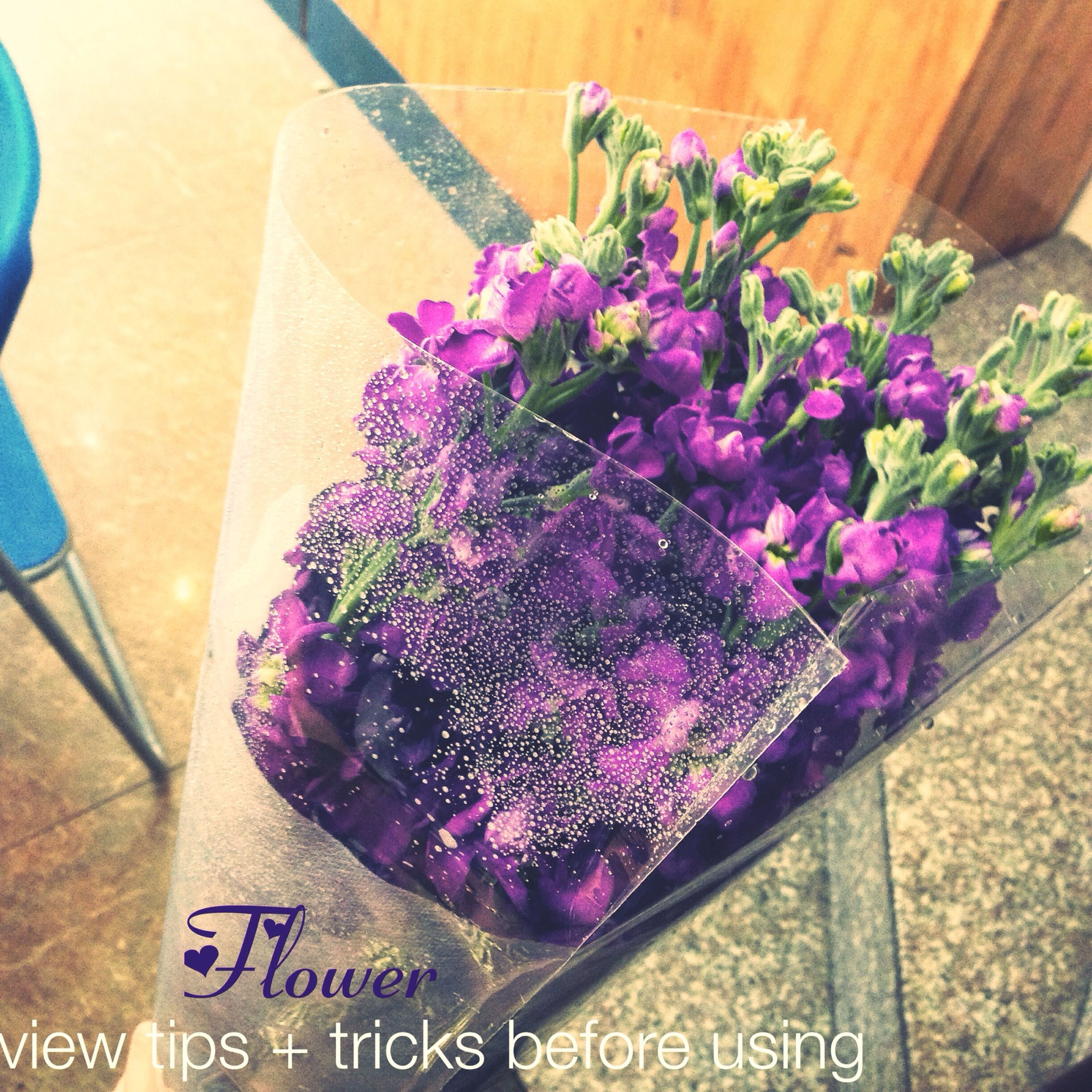 flower, freshness, high angle view, text, variation, pink color, indoors, purple, fragility, close-up, western script, no people, still life, table, plant, potted plant, petal, decoration, growth, day