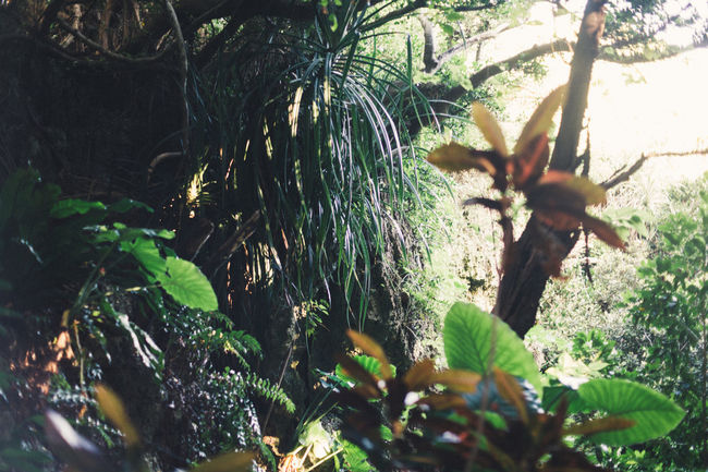 Okinawan jungle Forest Tranquility Outdoors Beauty In Nature Lights And Shadows OKINAWA, JAPAN EyeEm Nature Lover Vacations Summer EyeEm Gallery Travelling EyeEm Best Shots Sound Of Life Travel Destinations Sacred Place