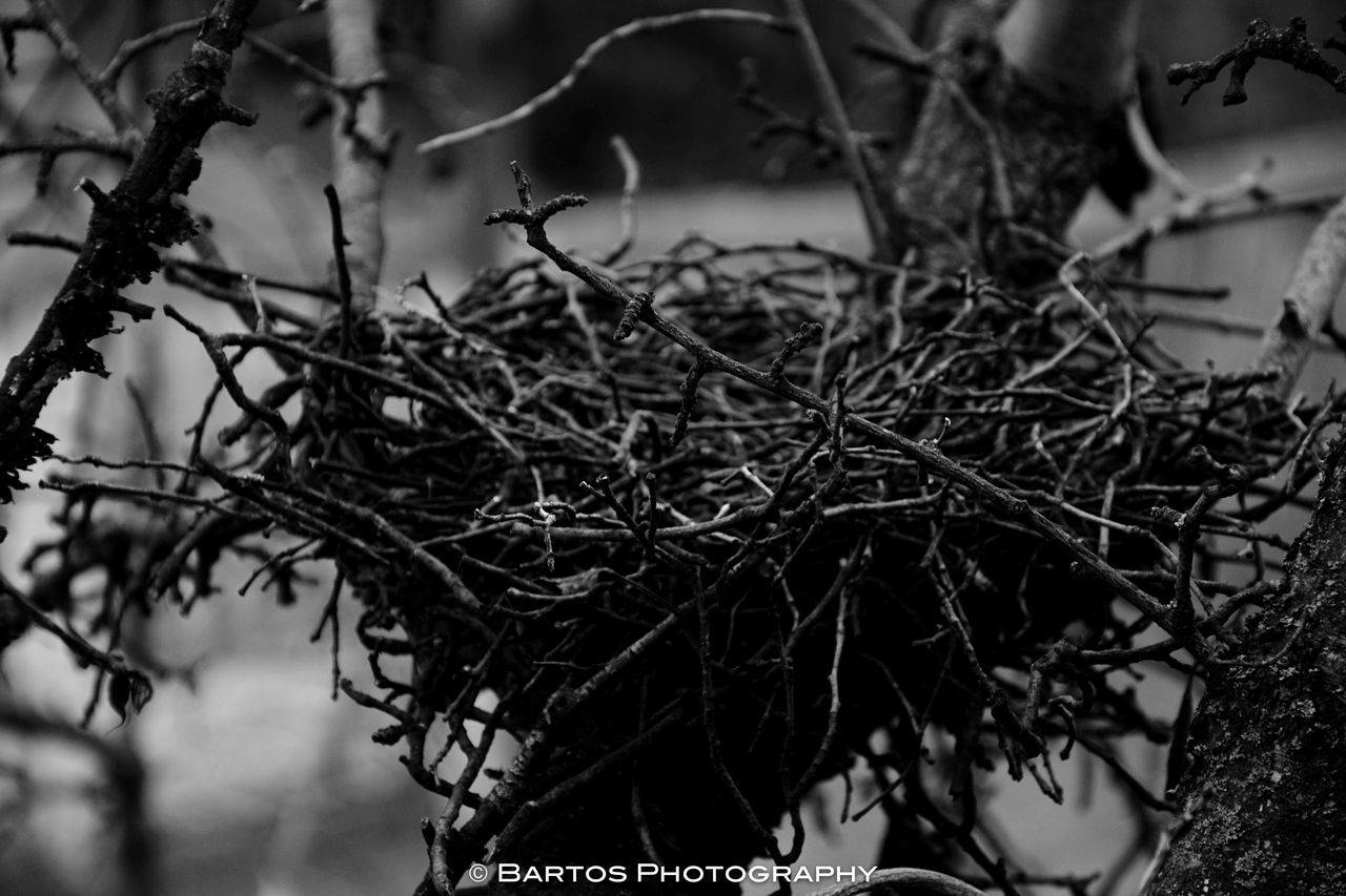 Nest Winter Nature Tree Bird Empty Back Home Born Life Past Beginning Home EyeEmNewHere