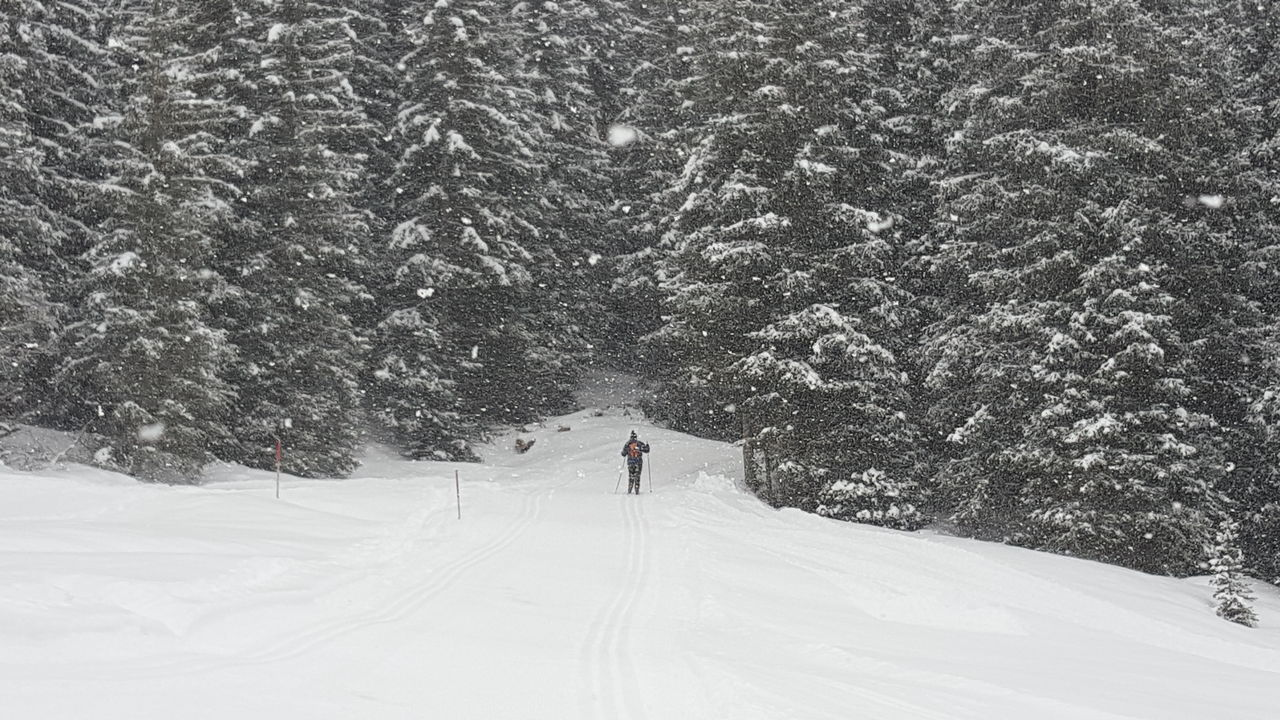 Person Skiing Amidst Trees On Snow Covered Field