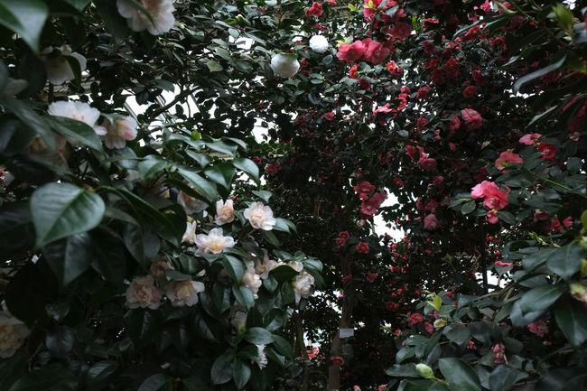 Nils Nowacki - Botanischer Garten - 2016 Berlin Botanical Gardens Botanischer Garten Berlin Flowers Glasshouse Green Pink Plants White Nils Nowacki
