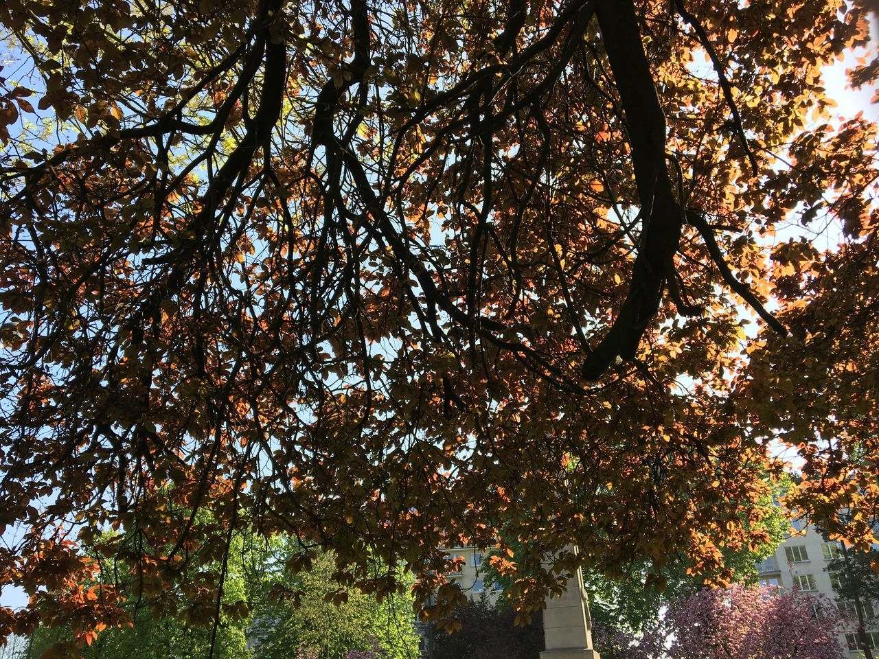 tree, autumn, nature, growth, leaf, change, low angle view, beauty in nature, day, outdoors, branch, no people, tranquility, scenics, sky