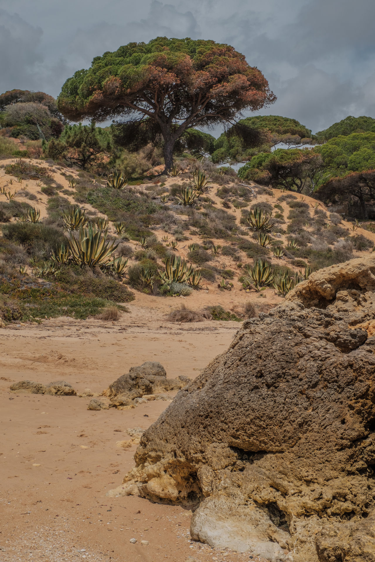 Algarve, Portugal Arid Climate Beauty In Nature Day Desert Landscape Mountain Nature Outdoors Physical Geography Rock Formation Scenics Tranquility Travel Destinations Tree