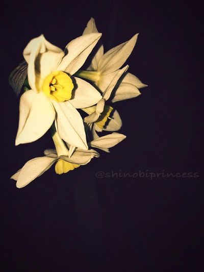 What if i start taking photography seriously??? First Eyeem Photo Photography Plants Flowers,Plants & Garden Shinobiprincess