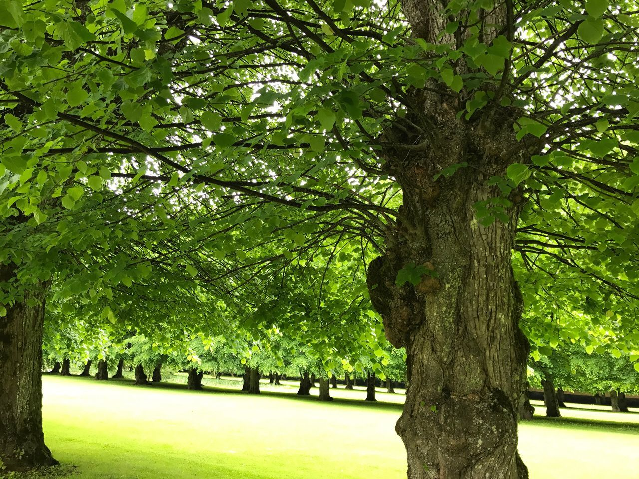 Mansion park Tree Tree Trunk Nature Tranquility No People Grass First Eyeem Photo