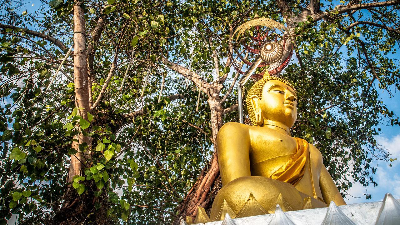 Buddhism Buddhist Buddhist Monks Buddhist Temple In Thailand Religions Sky Tree Yellow