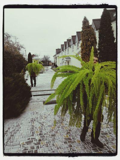 Walking plants