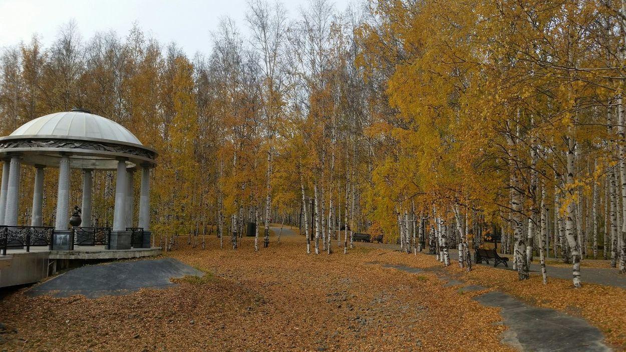 осень золотаяосень парк Природа Autumn Park Nature Fall