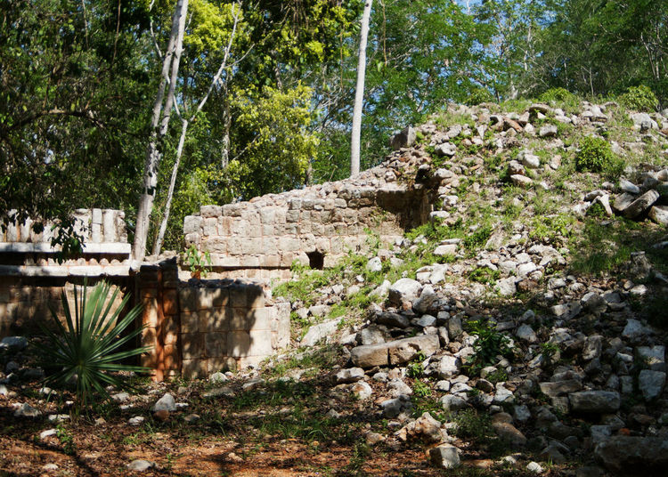 The Great Outdoors - 2017 EyeEm Awards The Architect - 2017 EyeEm Awards Architecture EyeEmNewHere Sky Travel Destinations History Mexico Religion RUTAPUC Glifos Escenary Yúcatan Columnas Nature Break The Mold Outdoors Close-up No People Low Angle View Sculpture Plant Tree Uxmal