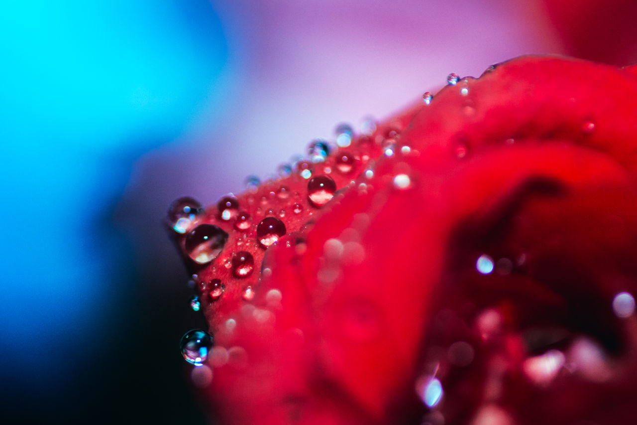 Bold Neons, Bright Pastels Atmospheric Mood Abstract Fine Art Beautiful Nature Beauty In Nature Drop EyeEm Best Shots EyeEm Gallery EyeEm Nature Lover Flower Fragility Freshness Getting Inspired Macro Nature Naturelovers Outdoors Raindrops Red Roses Water Waterdrops Bokeh Taking Photos