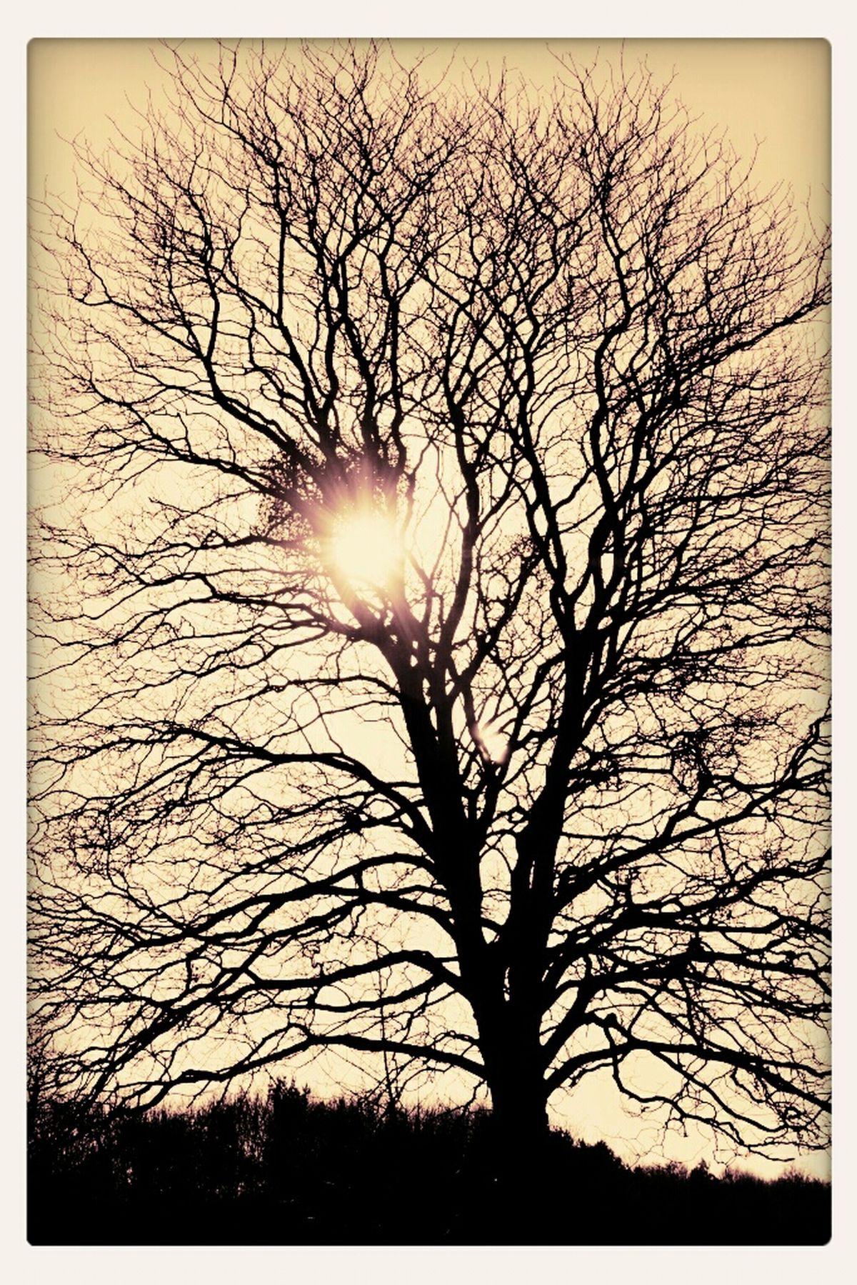 TreePorn Essex Eye4photography  EyeEm Best Shots - Black + White