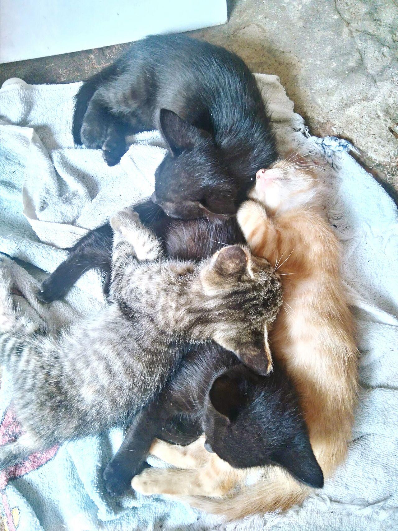 Pets Domestic Animals Bed Day Relaxation Happy Beautiful ♥ Cats Of EyeEm Bestmoment BLackCat Puppy Sleep Sleepy Puppy Baby Cat Animal Babycat