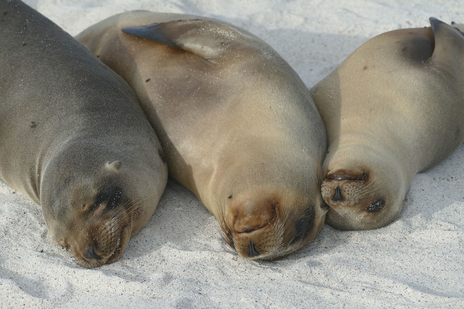 Beautiful stock photos of seal,  Affectionate,  Animal Themes,  Animals In The Wild,  Aquatic Mammal