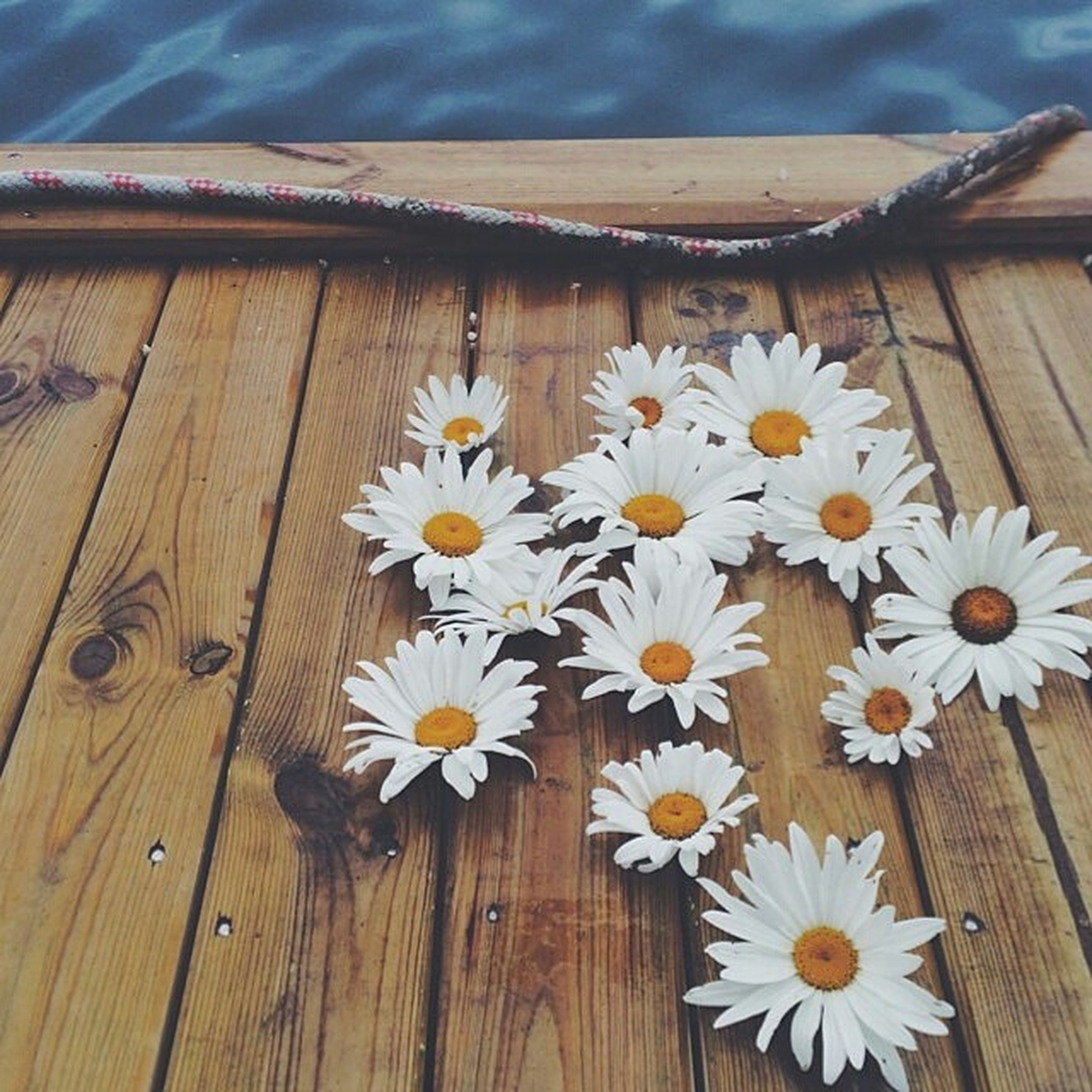flower, wood - material, freshness, wooden, fragility, petal, flower head, white color, beauty in nature, wood, close-up, daisy, nature, growth, high angle view, day, plant, no people, plank, table
