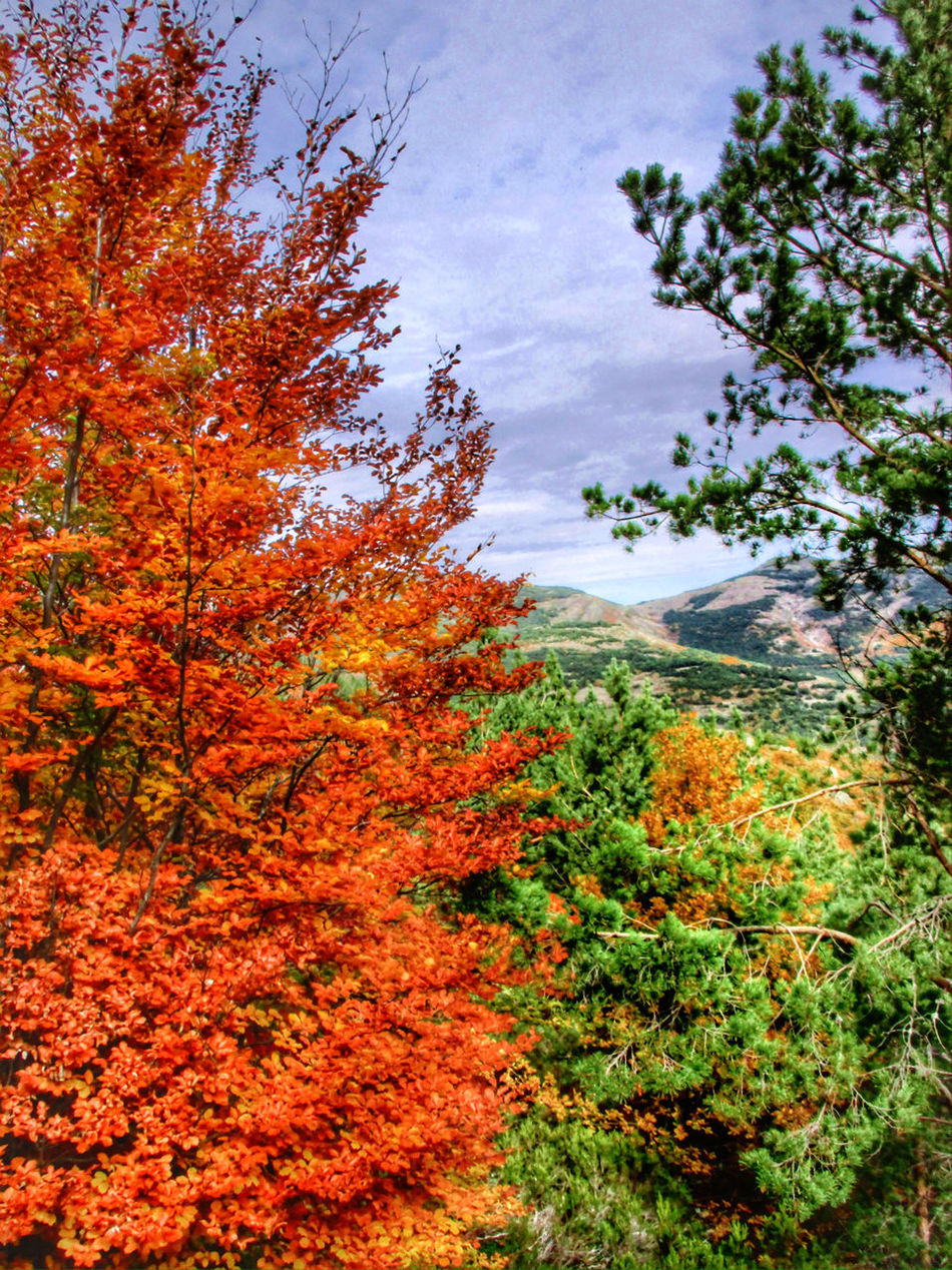 Nature Autumn Colorful Leaves