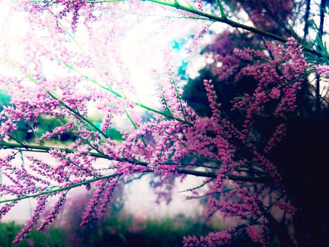 Nature Growth Tree Flower Beauty In Nature Pink Color No People Water Plant Outdoors Freshness Close-up Branch Day Fragility Minimalism Maximum Closeness Beauty In Nature Beautiful Nature Daylight The Great Outdoors With Adobe Nature Landscape_Collection Nature On Your Doorstep Nature Photography
