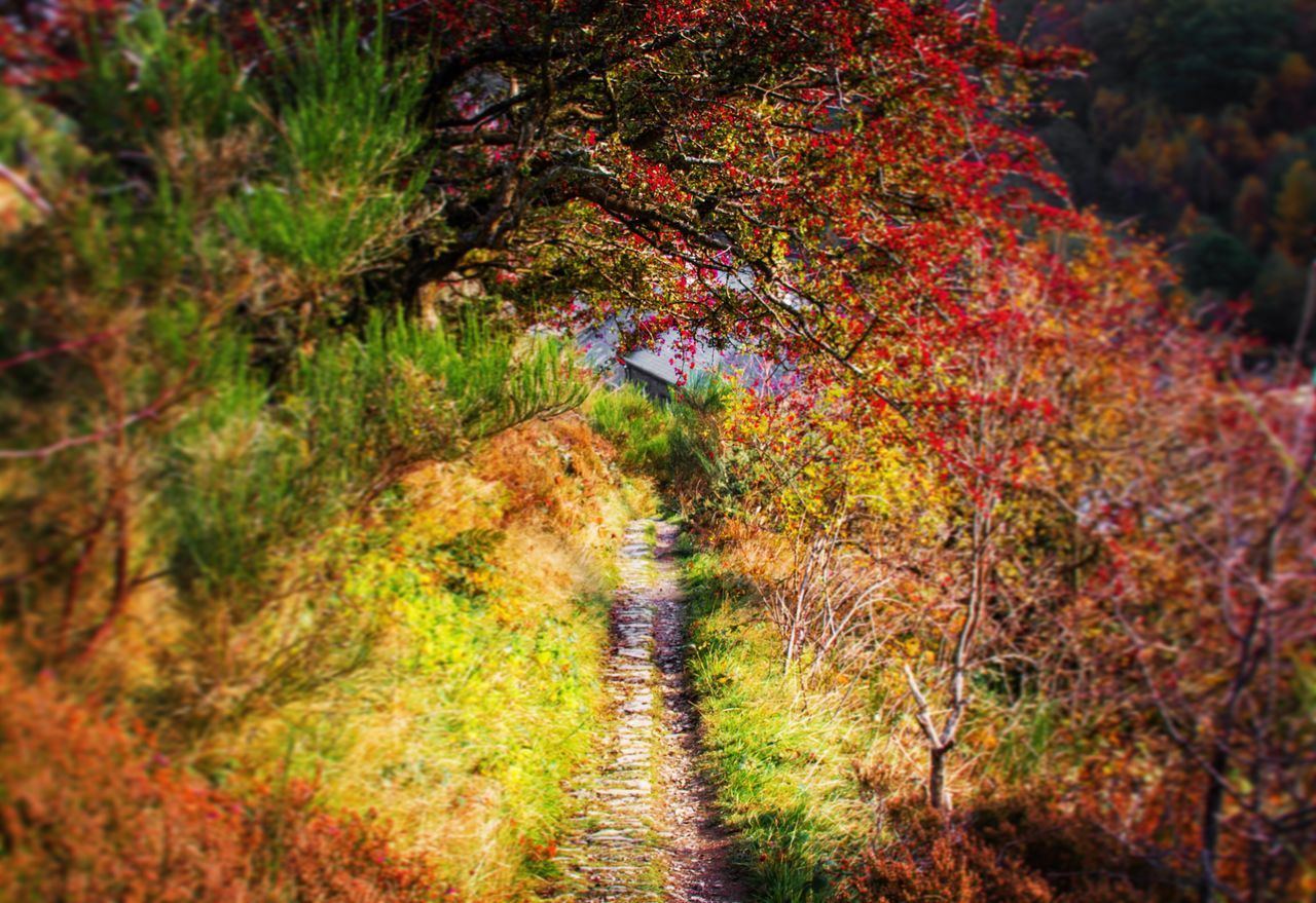 Nature Beauty In Nature Tree Tranquility The Way Forward Outdoors Change Autumn Day Forest No People Multi Colored Growth Scenics Wales Autumn Colors Landscape Elan Valley, Wales Elan Colorful