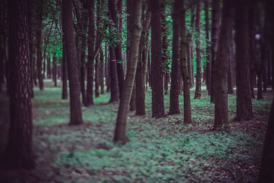 Nature On Your Doorstep Walking In The Woods
