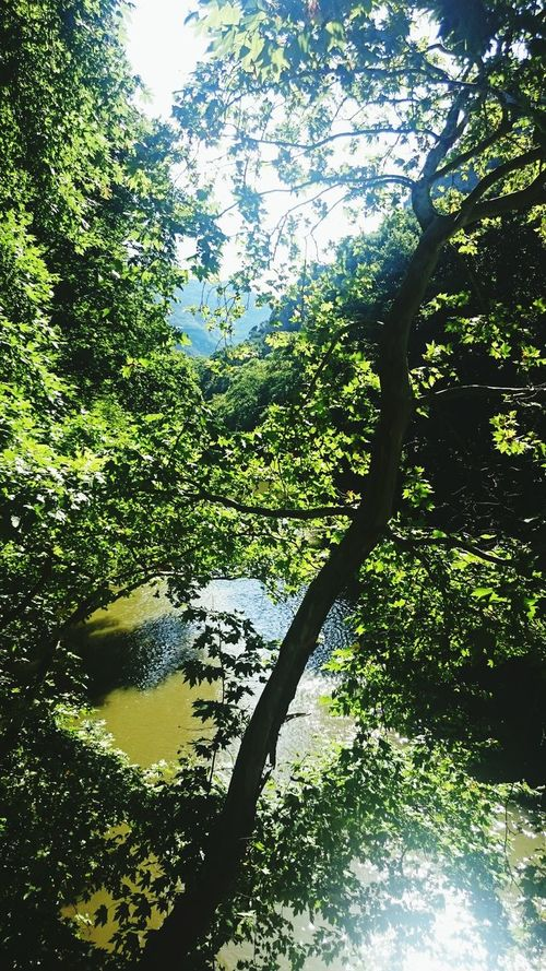 Taking Photos Relaxing Trees Nature_collection Tree_collection  Landscape_Collection