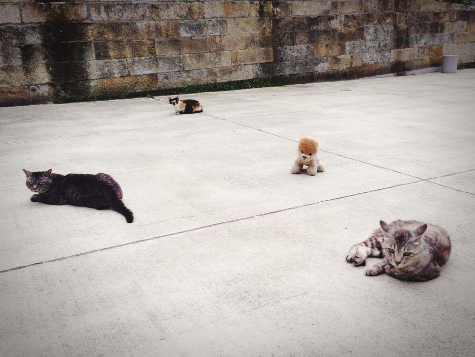 Beautiful stock photos of floor, Animal Themes, Comfortable, Day, Domestic Animals