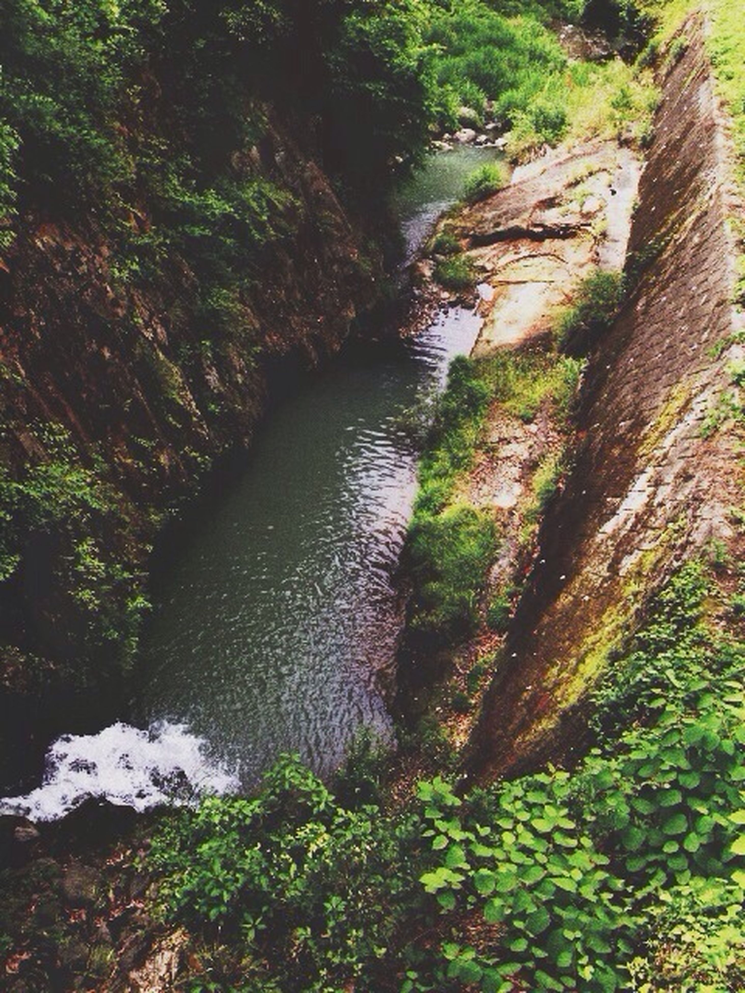 water, nature, tree, forest, tranquility, stream, rock - object, beauty in nature, growth, river, tranquil scene, plant, scenics, moss, day, flowing water, outdoors, green color, no people, high angle view