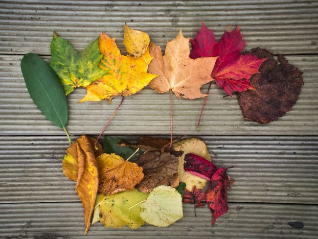 Rainbow of Autumn Leaves Colors Of Autumn Leaves Collection Colours No People Day Colour Image Horizontal Wood - Material Wooden Decking Autumn Leaf Dead Green Red Yellow Brown Nature Season  Crunchy Panels Steps Stairs