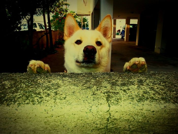 Eyem Best Shots Dog❤ Hello World Captured Moment Pictureoftheday Open Edit Check This Out EyeEm Gallery Animal_collection Dogportrait