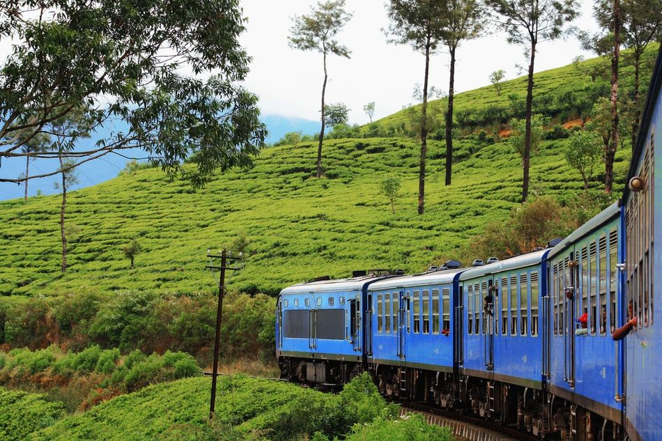 Sri Lanka Train Palm Trees Colourful Outdoor Nature Journey Dschungle Green Color Mode Of Transport Tree Tee Tee-plantage Traveling Backpacking