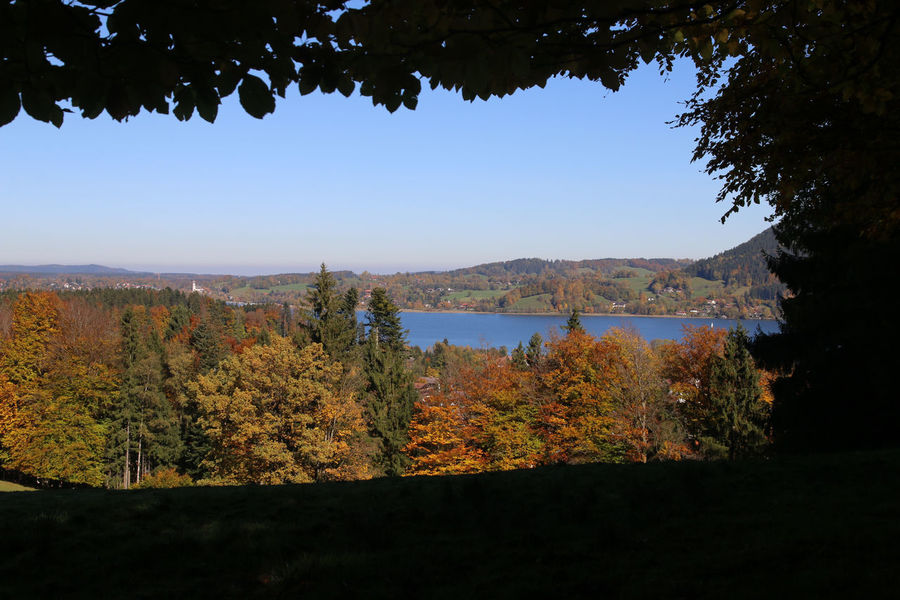Tegernsee, Bad Wiessee Autumn Beauty In Nature Branch Change Day Forest Growth Lake Landscape Leaf Mountain Nature No People Outdoors Scenics Sky Tranquil Scene Tranquility Tree Water