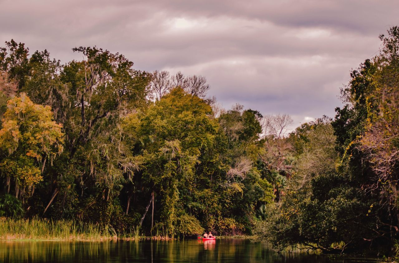 Canoeing in Alexander Springs Florida. This is a natural turquoise blue spring that is 72 degrees all year. It is full of alligators, birds of all kinds and black bears. It's beautiful here. Ladyphotographerofthemonth Showcase: November Taking Photos Waterfront Tranquility Tranquil Scene Southern Scenics Reflection Picturing Individuality Outdoors Forest Travel Water Nature Lake View Tourist Taking Photos Check This Out EyeEmBestPics Eye4photography  First Eyeem Photo EyeEm Nature Lover EyeEm Best Shots EyeEm Gallery