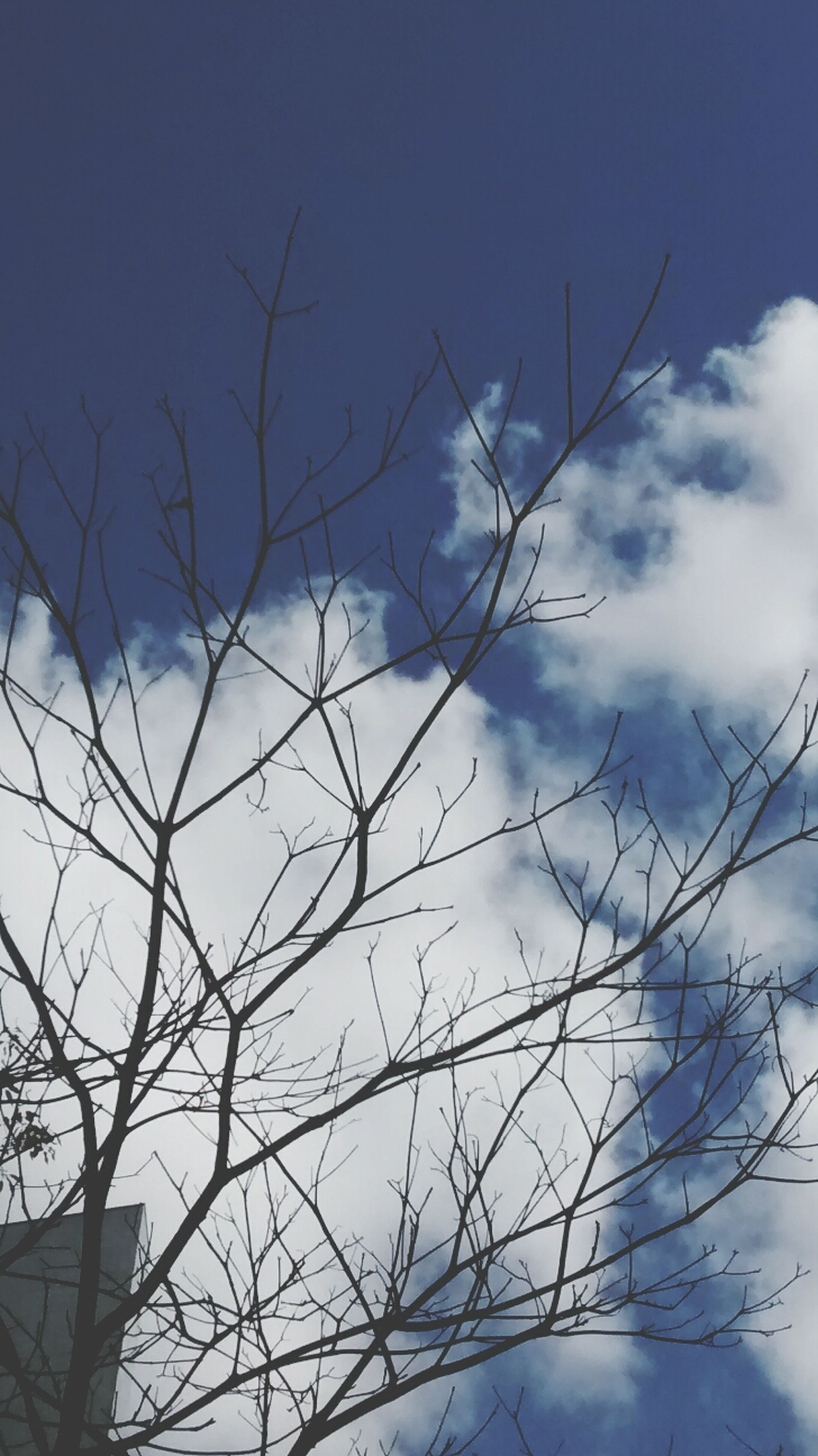 low angle view, bare tree, sky, branch, tree, blue, cloud - sky, nature, cloud, tranquility, beauty in nature, outdoors, day, high section, no people, cloudy, silhouette, scenics, winter, built structure