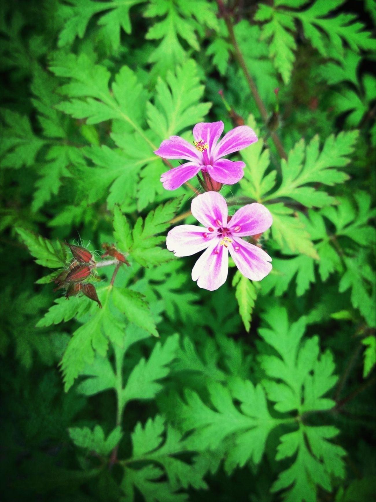 Flower Spring Flowers Flowerporn