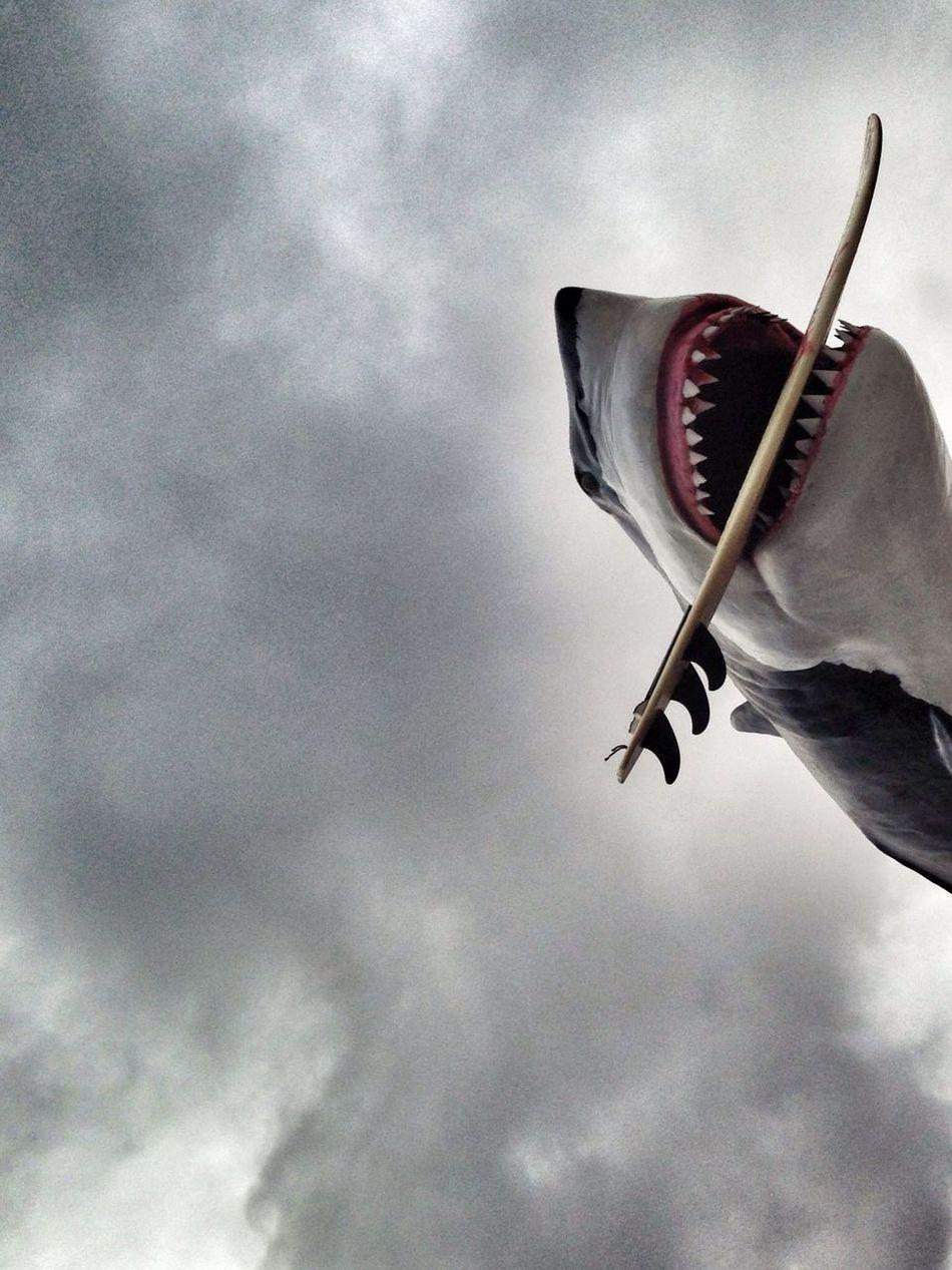 Beautiful stock photos of shark, Animal Representation, Art, Art And Craft, Cloud - Sky