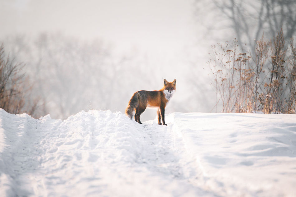 Beautiful stock photos of winter,  Animal Themes,  Animals In The Wild,  Day,  Field