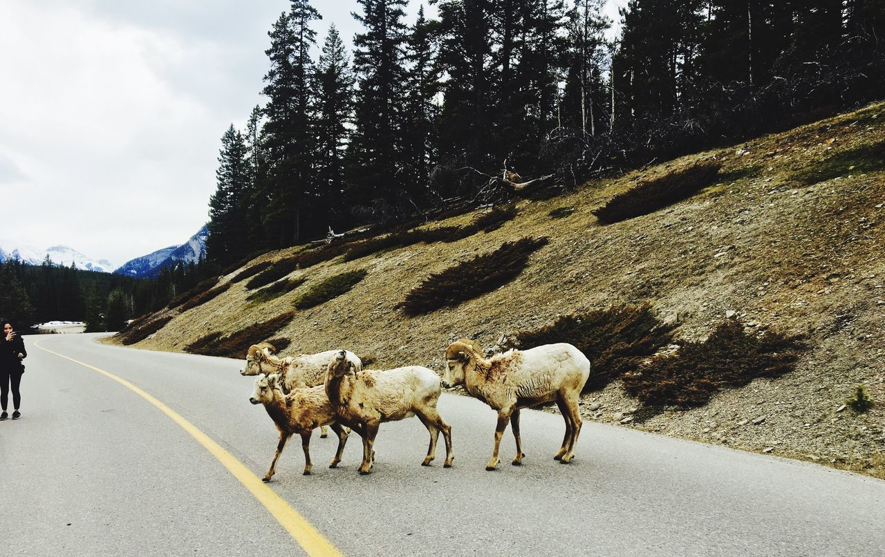 Hi goral Whatacoincidence Góral Banff  Canada TwoJackLake
