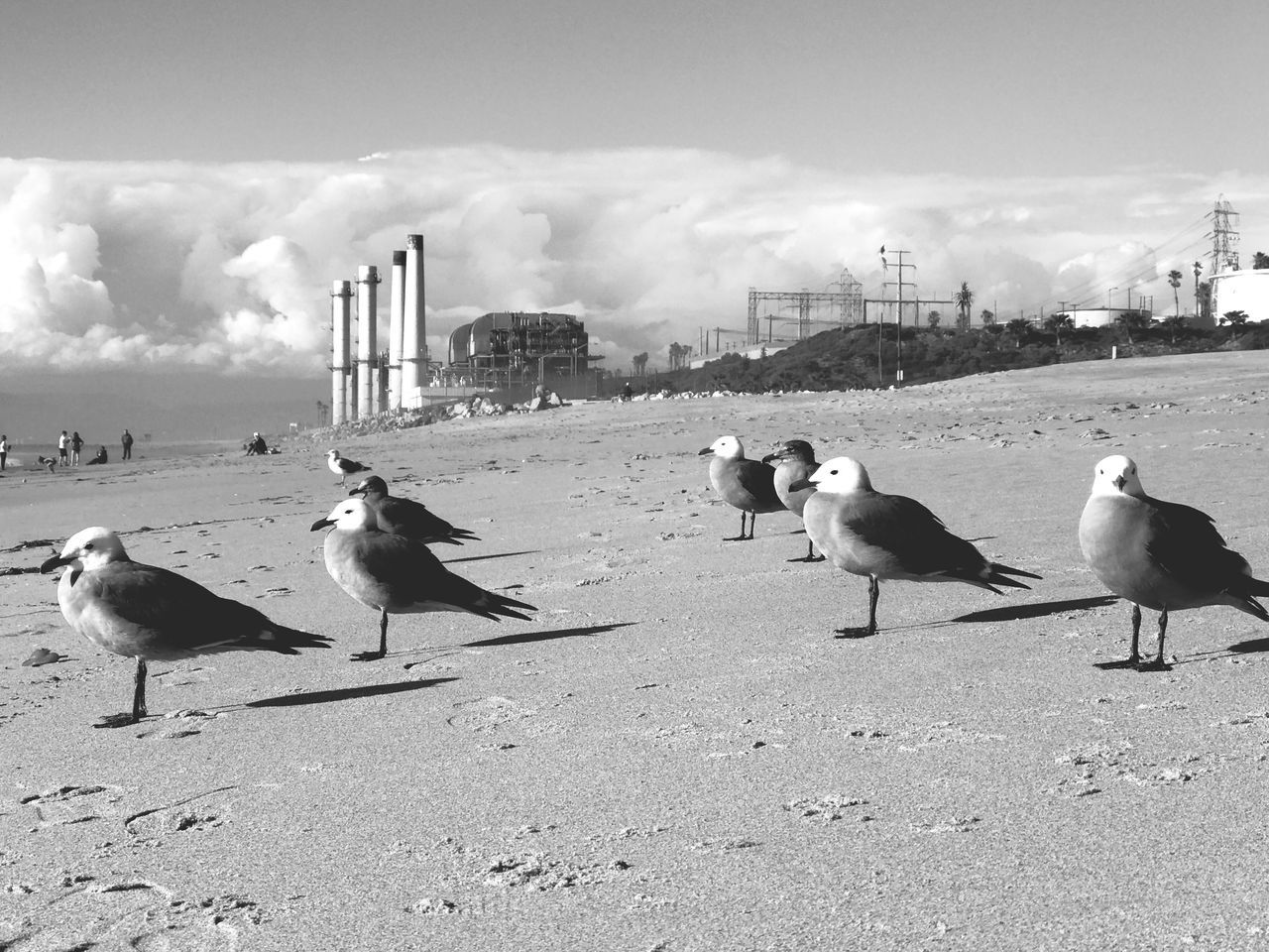animal themes, bird, animals in the wild, sand, animal wildlife, day, outdoors, nature, no people, sky, beach, seagull, large group of animals, water