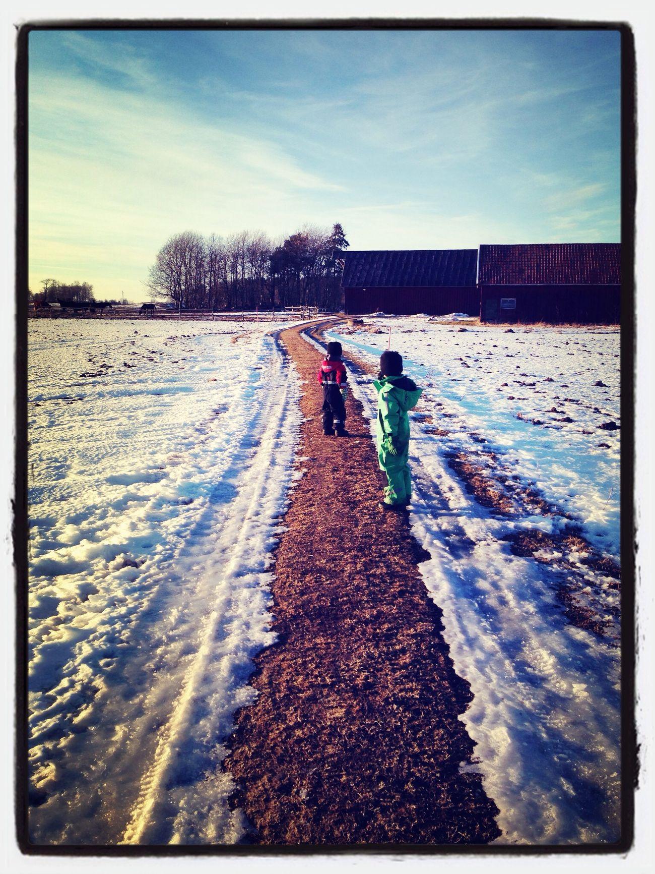 Winter Walk Snow