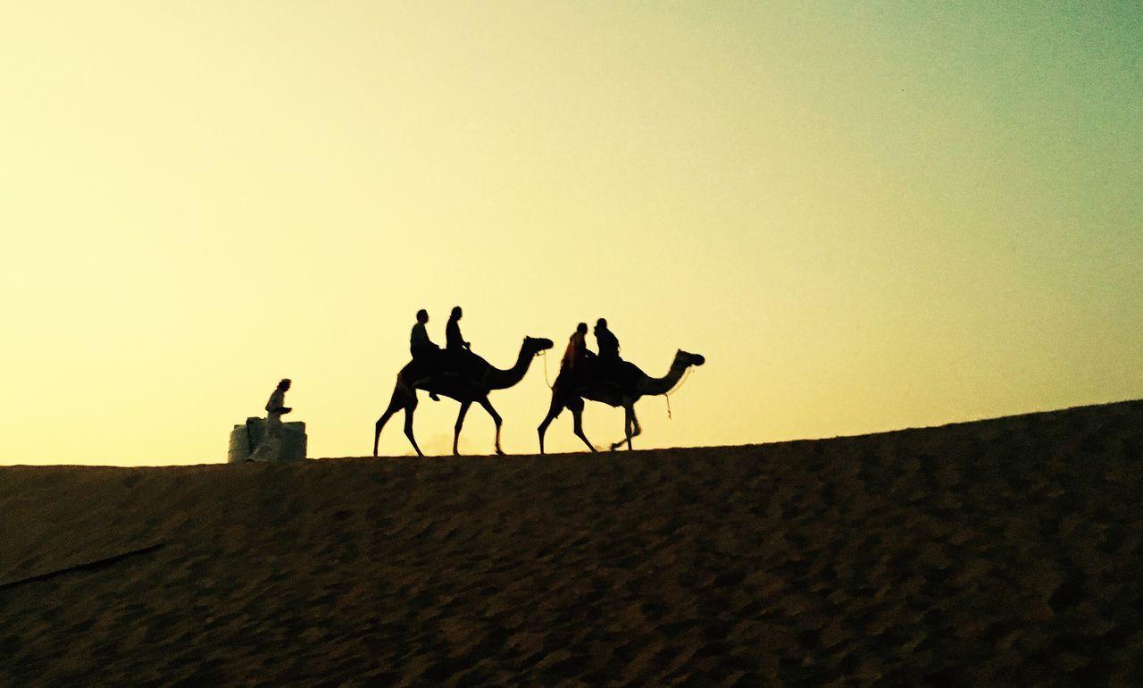 Silhouette Landscape Clear Sky Zoology Dark Mammal Tranquility Sky Herbivorous Outdoors Tranquil Scene Nature Camel Desert Dubai Tourism Night