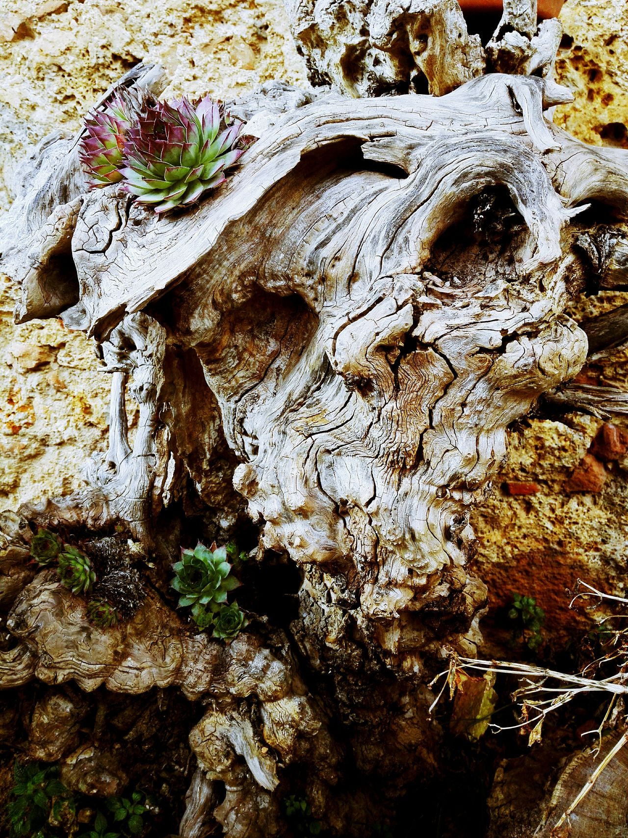 Skull And Bones Troll Wood Monster Flower Head Plant No People Nature Tree High Angle View Outdoors Close-up Day Water Backgrounds Concentric Beauty In Nature EyeEmNewHere