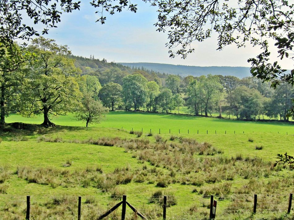 View from Grizedale forest path Landscape Trees Greenery Grizedale Forest  Grizedale Nature